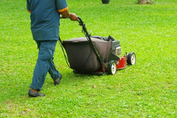 Best Professional Lawn Mower UK