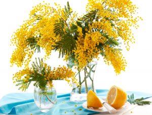 Mimosa Acaci