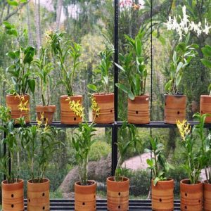 Add Some Containers to Your Garden