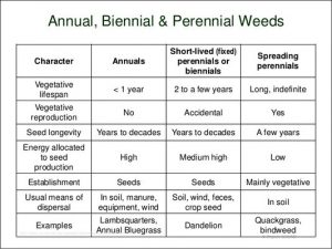 Annual Weeds Vs Perennial Weeds