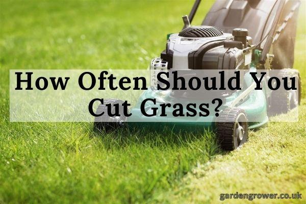 How Often Should You Cut Grass