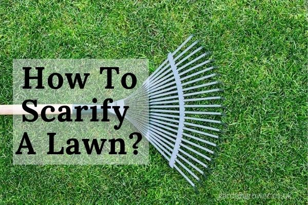 How To Scarify A Lawn_