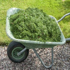Mulch the Lawn