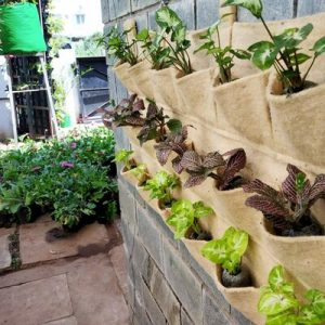 Think About Vertical Planting
