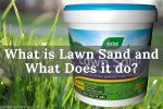 What is Lawn Sand and What Does it do_