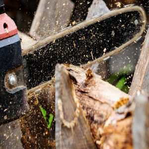 Selecting The Right Chainsaw
