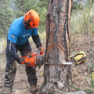 What Will Happen When You Cut Wet Wood with A Chainsaw